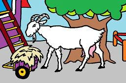 Rogata koza