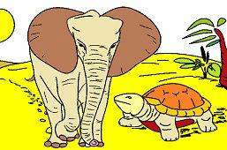 Słoń afrykański i żółw
