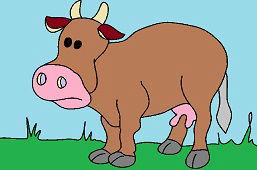 Zwykła łaciata krowa
