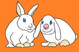 Białe króliki