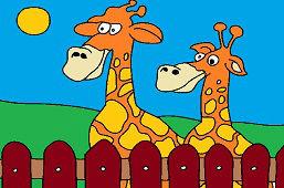 Żyrafy za płotem