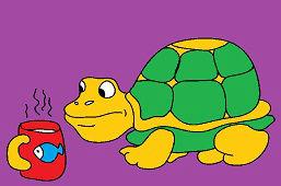 Ciekawy żółw