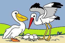 Pelikan i bocian