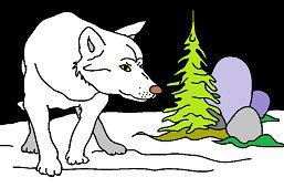 Wilk w zimie