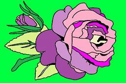 Purpurowa róża