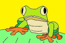 Żaba z dużymi oczami