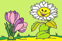 Słonecznik i krokusy