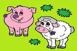 Owca i świnka