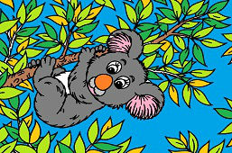 Australijska koala
