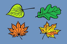 Czy znasz liście drzew?