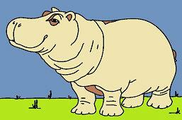 Hipopotam afrykański
