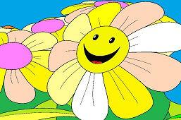 Kwiaty stokrotki